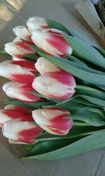 Тюльпаны голландские к 8-му марту